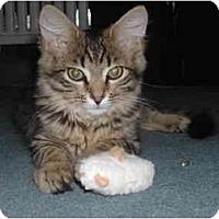 Adopt A Pet :: Fabulous FLUFFS - cincinnati, OH