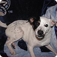Adopt A Pet :: Martin - Hazard, KY