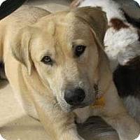 Adopt A Pet :: Chance - Justin, TX