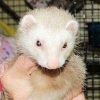 Adopt A Pet :: Flower - Pinesville, OR
