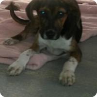 Adopt A Pet :: Slim - Somers, CT