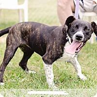 Adopt A Pet :: Gracie - Bristol, TN