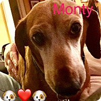 Adopt A Pet :: Montego aka Monty - Prole, IA
