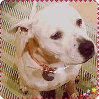 Adopt A Pet :: Coco Bean, Gentle Sweet  Girl - Corona, CA