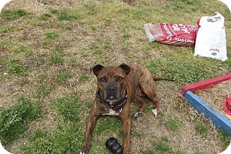 Terrier (Unknown Type, Medium) Mix Dog for adoption in sanford, North Carolina - Brin