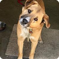 Adopt A Pet :: LENNY - Cadiz, OH