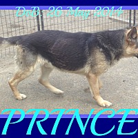 Adopt A Pet :: PRINCE - Middletown, CT