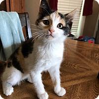 Adopt A Pet :: Sabrina - Painted Post, NY