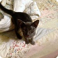 Adopt A Pet :: Chewy, Mannie & Mia - El Cajon, CA