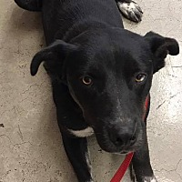 Adopt A Pet :: Tala - East Hartford, CT