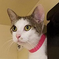 Adopt A Pet :: Sassy - Fairport, NY