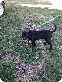 Labrador Retriever/Hound (Unknown Type) Mix Dog for adoption in Baxter, Tennessee - Buttercup