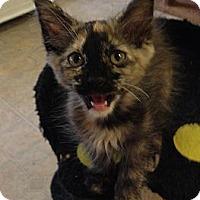 Adopt A Pet :: Abby - Mobile, AL