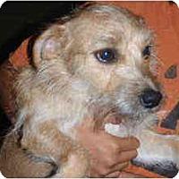 Adopt A Pet :: Jesse - Arlington, TX