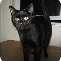 Adopt A Pet :: Charity - Shelton, WA