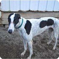 Adopt A Pet :: Allison (Tjays Allison) - Chagrin Falls, OH