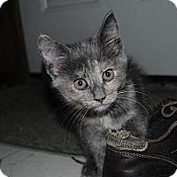 Adopt A Pet :: Juno - Paintsville, KY