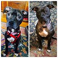 Adopt A Pet :: Paikea - Clarksburg, MD
