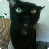 Adopt A Pet :: Lionel - St. Louis, MO