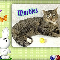 Adopt A Pet :: Marbles - Buffalo, IN