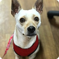 Adopt A Pet :: Scout - Chillicothe, OH