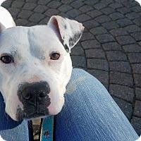 Adopt A Pet :: Bran - Dayton, OH