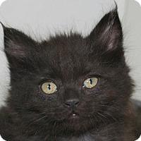 Adopt A Pet :: Charger - Republic, WA