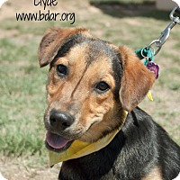 Adopt A Pet :: Clyde - Cheyenne, WY