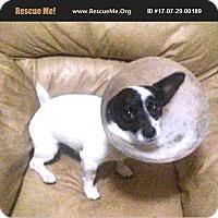 Adopt A Pet :: Jack - LaBelle, FL