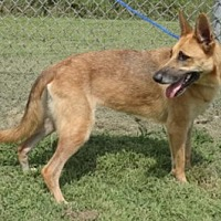 Adopt A Pet :: Sierra - Olive Branch, MS