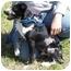 Photo 3 - Catahoula Leopard Dog Mix Puppy for adoption in Portsmouth, Rhode Island - Travis