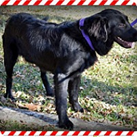 Adopt A Pet :: Gilly - New Canaan, CT