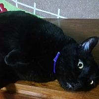 Adopt A Pet :: Tyler - Walla Walla, WA