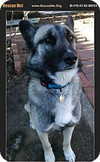 German Shepherd Dog/Husky Mix Dog for adoption in Bay City, Michigan - Max