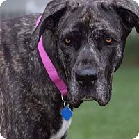 Adopt A Pet :: Nila - Manassas, VA