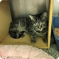 Adopt A Pet :: Riley -Adoption Pending! - Colmar, PA
