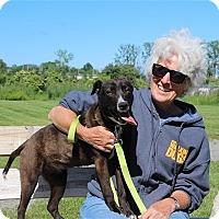 Adopt A Pet :: Dinky - Elyria, OH