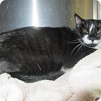 Adopt A Pet :: Moxy - North Richland Hills, TX