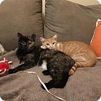 Adopt A Pet :: Maggie & Michonne - Hazlet, NJ