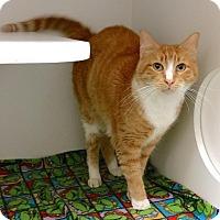Adopt A Pet :: Cooper - Alvin, TX