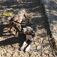 Adopt A Pet :: Archie&Arnie - Palmdale, CA
