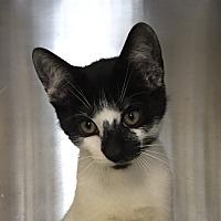Adopt A Pet :: Chris - Jackson, MI