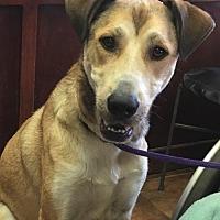 Adopt A Pet :: Buddy - Amarillo, TX