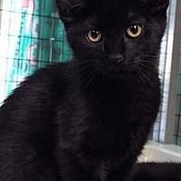 Adopt A Pet :: Tootsie - Grants Pass, OR