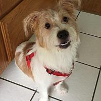 Adopt A Pet :: RUSTY - Lakewood, CA