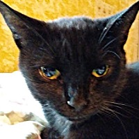 Adopt A Pet :: Gavi - Fredericksburg, VA
