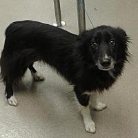 Adopt A Pet :: Selma -chipped - Decatur, GA