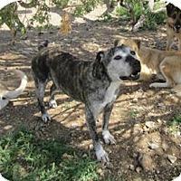 Adopt A Pet :: Everest - Santa Fe, NM