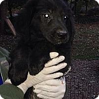 Adopt A Pet :: Howard - New Boston, NH