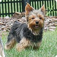 Adopt A Pet :: Dylan - Charlotte, NC